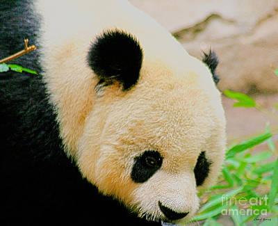 Panda  Print by Cheryl Young