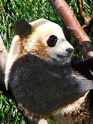 Panda Bear Photograph - Panda In Tree by Susan Savad