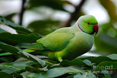 Parakeet Digital Art - Parakeet In Thought by Pravine Chester