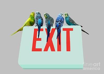 Parakeet Digital Art - Parakeets . Exit by Renee Trenholm