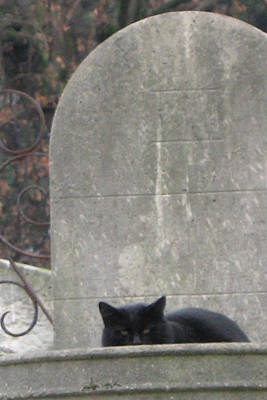 Paris Cemetery - Pere La Chaise - Black Cat On Gravestone - Le Chat Noir Print by Kathy Fornal