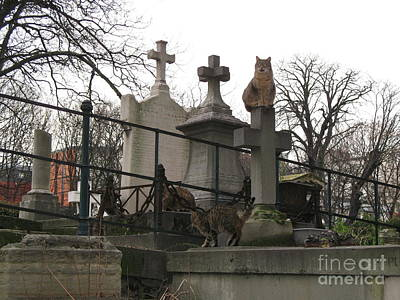 Paris Cemetery - Pere La Chaise - Wild Cats Roaming Through Cemetery Print by Kathy Fornal