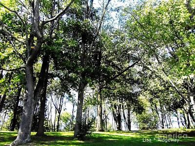 Etc. Mixed Media - Park Trees by Lisa  Ridgeway