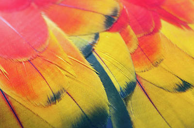 Omaha Photograph - Parrot Feathers by Flash Parker