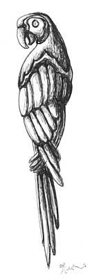 Parrot Ink Sketch Original Art By Madart Print by Megan Duncanson
