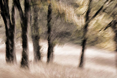 Passing By Trees Print by Carol Leigh