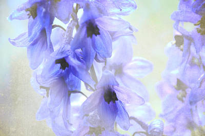 Passion For Flowers. Blue Dreams Print by Jenny Rainbow