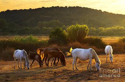 Pasturing Horses Print by Carlos Caetano