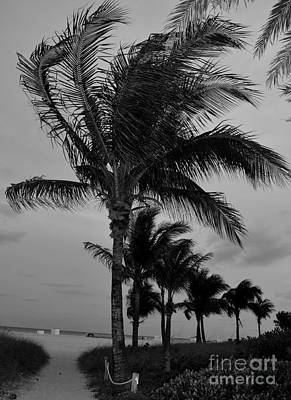 Florida Photograph - Path To South Beach by Pravine Chester