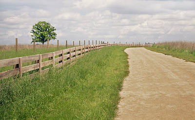 Pathway Surrounded By Wooden Fence Print by Kathryn Froilan