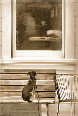 Puppy Digital Art - Patiently Waiting by Rich Beer