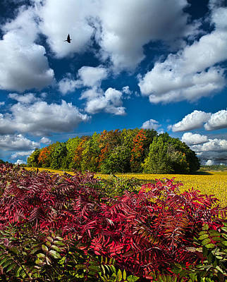 Red Bird Photograph - Peace Of Mind by Phil Koch
