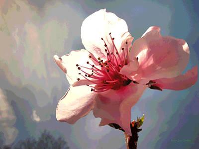Peach Blossom Macro 2 Print by Joyce Dickens
