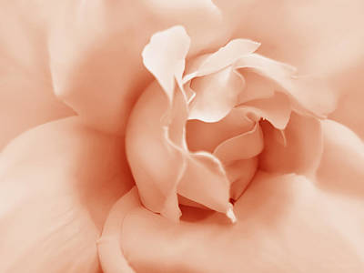 Peach Pastel Rose Flower Print by Jennie Marie Schell
