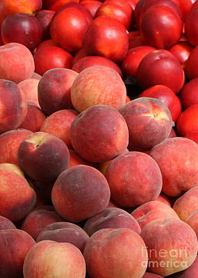 Peaches And Nectarines Print by Carol Groenen