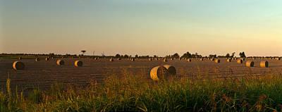 Peanut Field Bales At Dawn 1 Print by Douglas Barnett