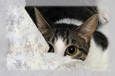 Fine Art Cat Digital Art - Peek A Boo I See You Too by Andee Design