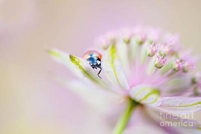 Astrantia Photograph - Peek-a-boo by Jacky Parker