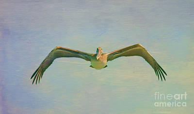 Pelican Mixed Media - Pelican Dreamy Feel by Deborah Benoit