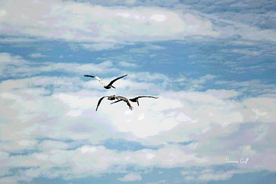 Bird Photograph - Pelican Posse by Suzanne Gaff