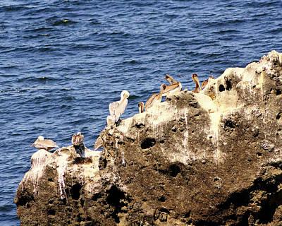 Pelican Rock Print by Chris Anderson