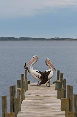 Pelicans On A Timber Landing Pier Mooring Print by Ulrich Schade