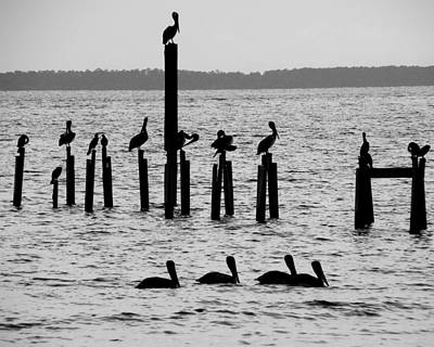 Pelicans On Posts Print by Judy Wanamaker