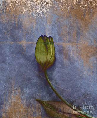 Aimelle Photograph - Penchant Naturel - 07at04b3 by Variance Collections