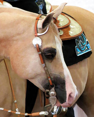 Scottsdale Arabian Horse Show Photograph - Pensive by Diane Wood