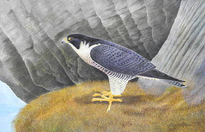 Falcon Mixed Media - Peregrine by Alan Suliber