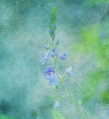 Garden Flowers Photograph - Perfect Dream by Kim Hojnacki