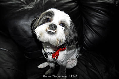 Dog Photograph - Perfect Subject  by G Adam Orosco