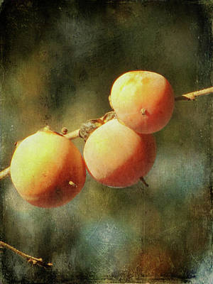 Apricot Photograph - Persimmons by Amy Tyler