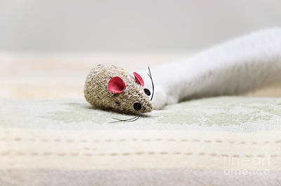 Cats Photograph - Pet Mouse by Andee Design