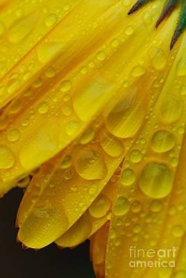 Petal Drops A Flower Petal Abstract Print by John Kelly