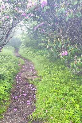 Petaled Path Print by Rob Travis