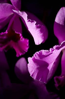 Pink Photograph - Petals Galore by Trish Tritz