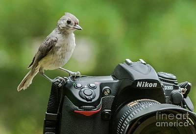 D700 Photograph - Photographer's Little Helper by Jim Moore