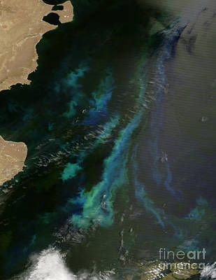 Phytoplankton Off Argentinas Coast Print by Nasa
