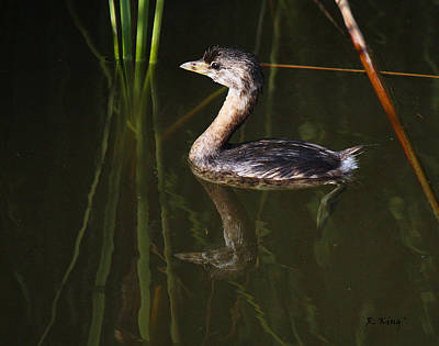 Pied-billed Grebe In The Reeds Print by Roena King