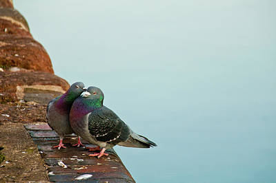 Pigeons In Love Print by Image by J. Parsons