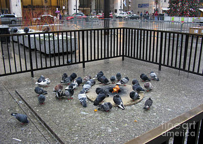 Pigeons In The Civic Center Plaza Chicago Print by Ausra Huntington nee Paulauskaite