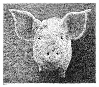 Piglets Drawing - Piglet by Scott Woyak