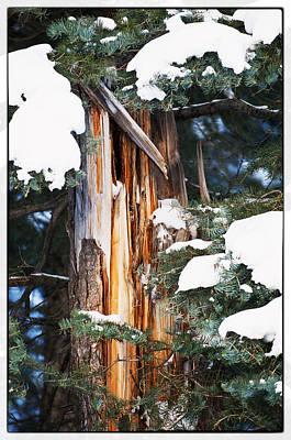 Photograph - Pine Bark by Lisa  Spencer