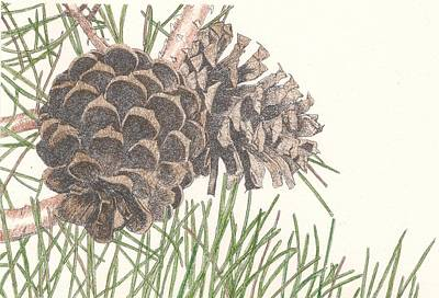 Buzzard Drawing - Pine Cone by Marci Mongelli
