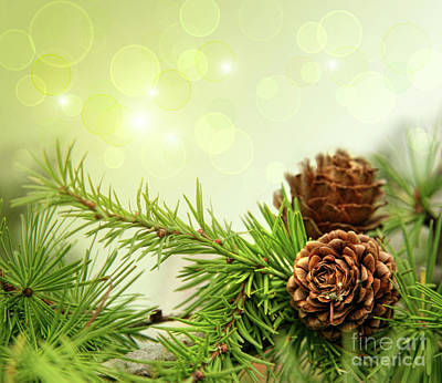 Pine Cones On Branches With Holiday Background Print by Sandra Cunningham