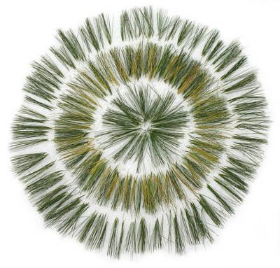 Pine Needle Flower Print by David Esslemont