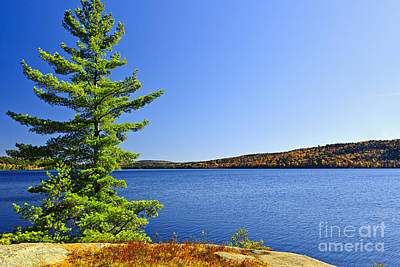 River Photograph - Pine Tree At Lake Shore by Elena Elisseeva
