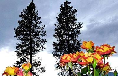 Tree Roses Photograph - Pine Trees And Roses by Will Borden