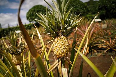 Pineapple Print by Mathew Hasegawa